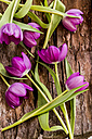 Tulips on wood - SARF001577