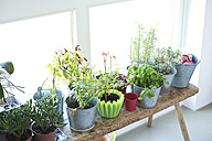 Plants and herbs at the window - MAEF010163