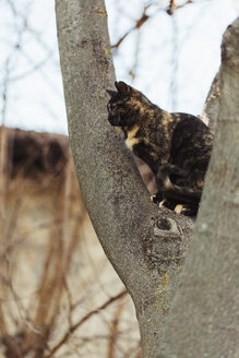 Tabby cat sits on tree trunk - LS000044