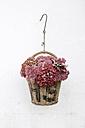 Hydrangea and cauliflower mushroom in a basket - GISF000087