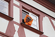 Germany, Ravensburg, witch looking out of window on the parade of the Swabian-Alemannic Fastnacht - SIE006555