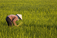 Vietnam, Quang Nam Province, peasant planting rice in field - MAD000166