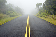 USA, Hawaii, Waimea, street in fog, Kokee State Park - BRF001123