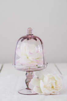 Peonies and glass - ECF001795