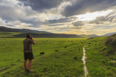USA, Yellowstone National Park, Man photographing herd of buffaloes  in Lamar Valley - FOF007972