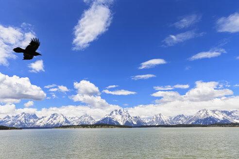 USA, Yellowstone National Park, Yellowstone Lake, View to Absaroka Mountains and Rocky Mountains, flying bird - FOF008011