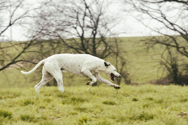 Dog running on meadow - ONF000814
