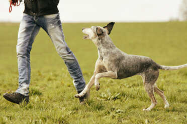 Man and dog running on meadow - ONF000820