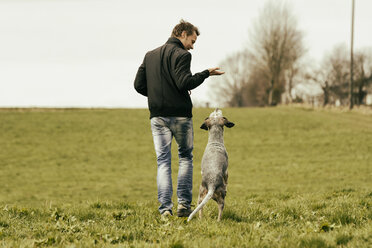 Man exercising with dog on meadow - ONF000819