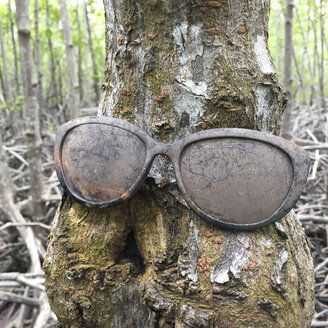 Sunglasses on mangrove trunk, Ayutthaya Thailand - DRF001582