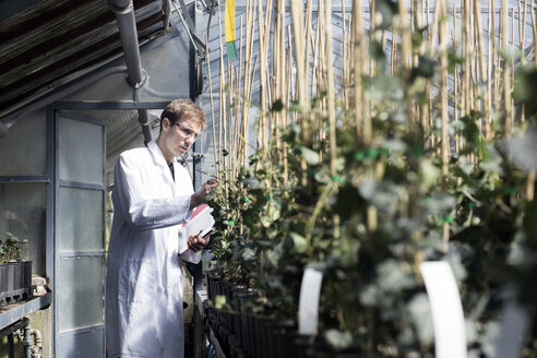 Scientist examining plants in greenhouse - SGF001521