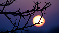 Bare branches in front of sunset - HOHF001333