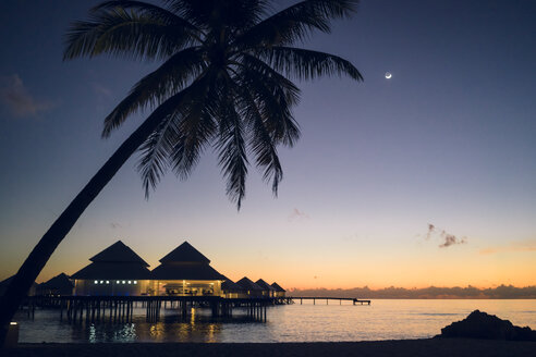 Maldives, Ari Atoll, sunset with palm tree and water villas - FLF000931