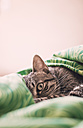 Tabby cat resting on a bed cover - RAEF000125