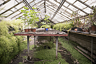 Foliage plants in greenhouse of a plant nursery - ASCF000144