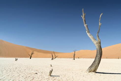 Namibia, Namib Desert, Namib Naukluft Park, Sossusvlei, Deadvlei - CLPF000099