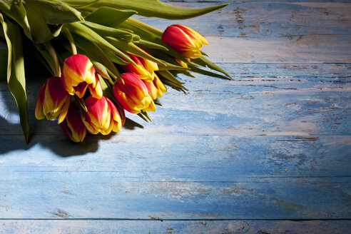 Bouquet of tulips on blue wood - CSF025355