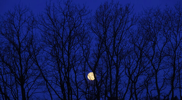 Full moon behind branches of a bare tree - JTF000651