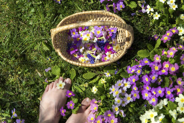 Woman's feet and basket with violets - MIDF000319