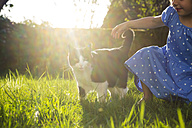 Little girl with cat on a meadow at backlight - LVF003200