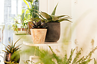 Different agaves and plants in flower pots - MFF001572