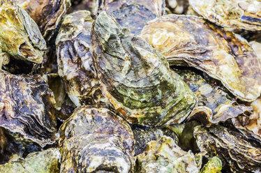 Zeeland oysters - THAF001361