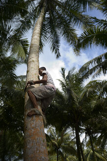 Indonesia, Simeulue Island, man harvesting coconuts - FLK000584