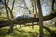 Boy relaxing on a branch at sunlight - SARF001746