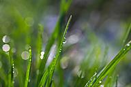 Dew on grass, close up - JTF000658