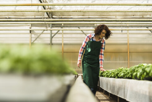Young female gardener working in plant nursery - UUF003950