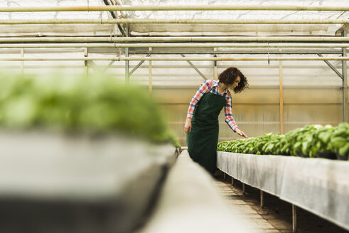 Young female gardener working in plant nursery - UUF003951