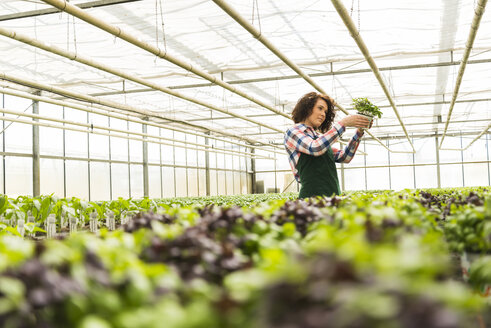 Young female gardener working in plant nursery - UUF003952