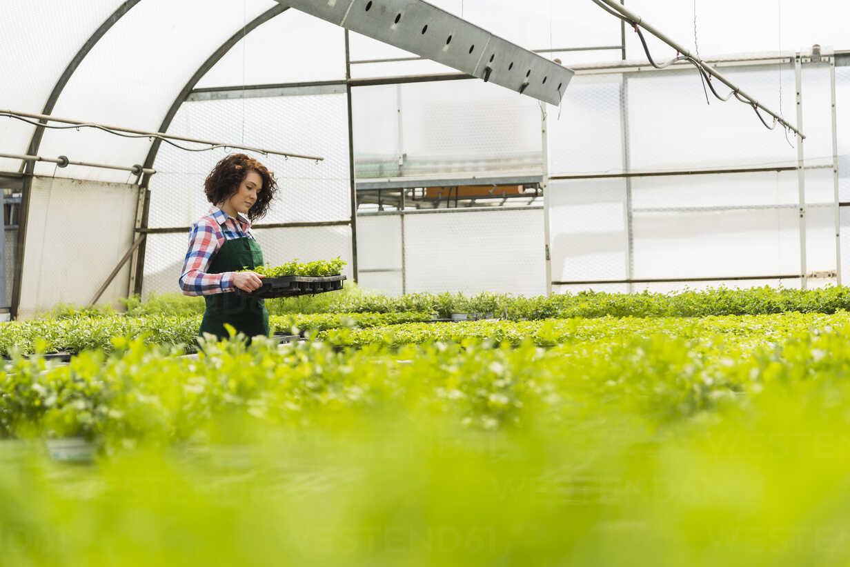 Young female gardener working in plant nursery - UUF003944 - Uwe Umstätter/Westend61