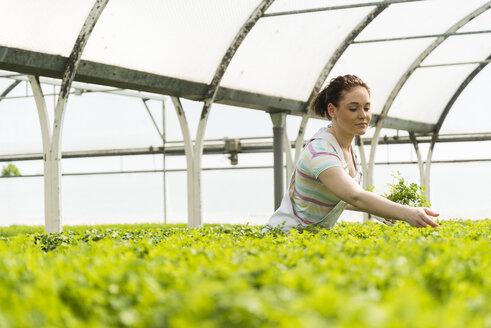 Young female gardener working in plant nursery - UUF003961
