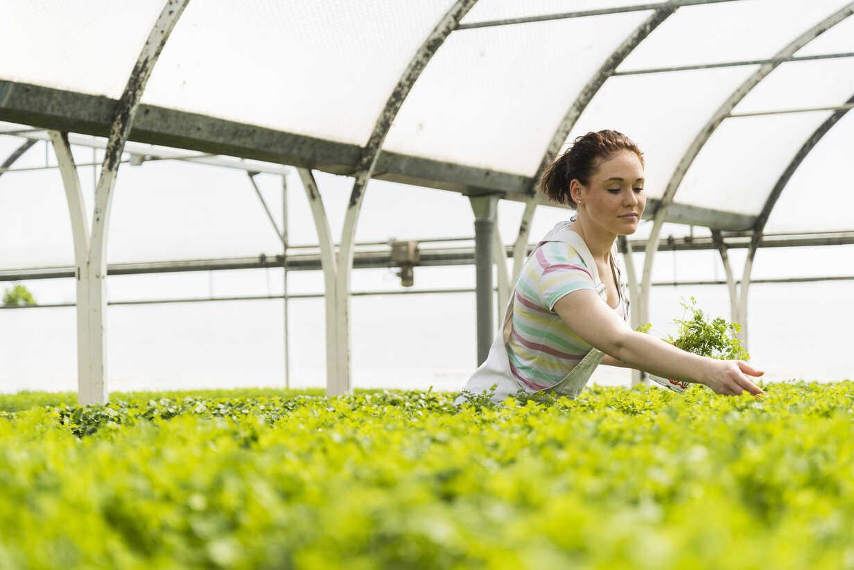 Young female gardener working in plant nursery - UUF003961 - Uwe Umstätter/Westend61