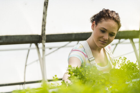 Young female gardener working in plant nursery - UUF003962