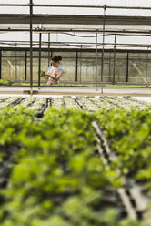 Young female gardener working in plant nursery - UUF003995