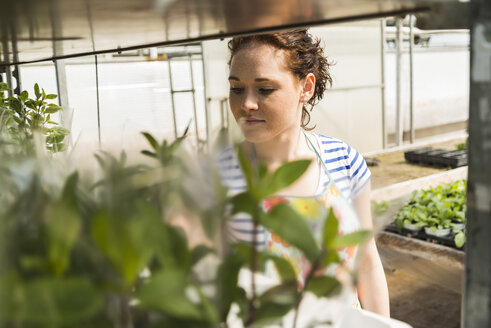 Young female gardener working in plant nursery - UUF003998