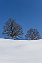 Germany, Bavaria, Allgaeu, bare trees in winter - EGBF000010