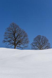Germany, Bavaria, Allgaeu, bare trees in winter - EGBF000010