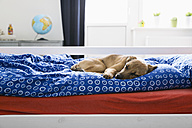 Boy lying on bed in children's room - PDF000923