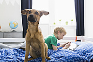 Dog sitting on bed with boy using digital tablet - PDF000928