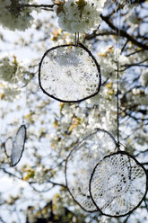 Dream catcher made of old crochet tablecloths hanging in blossoming cherry tree - GISF000111