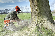 Lumberjack felling tree - NNF000337