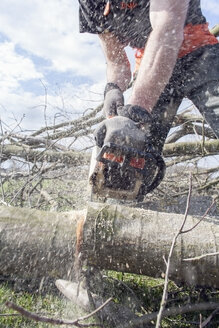 Lumberjack sawing tree trunk - NNF000341