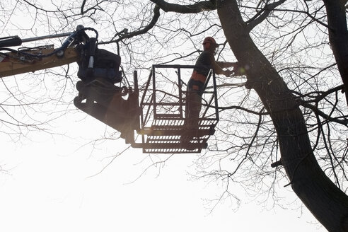 Lumberjack on hoist cutting tree - NNF000345