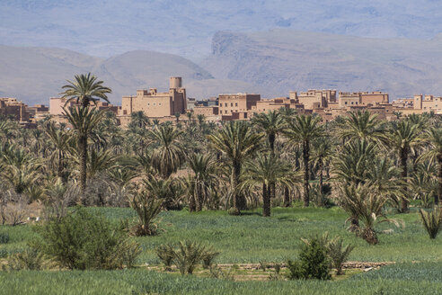 Morocco, view to kasbah behind palms at the Draa Valley - HSKF000018