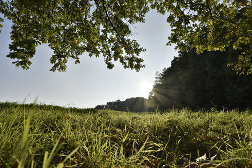 Germany, Spessart, Aschaffenburg, sunlight on meadow - FDF000088
