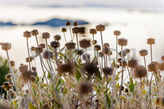 Greece, Corfu, grasses at the coast - EGBF000083