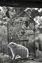 Cuba, Guanabo, rabbit in birdcage - FBF000381